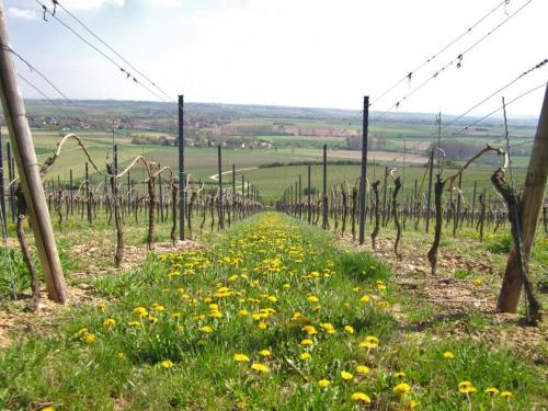 Weingut Münzenberger Zornheim